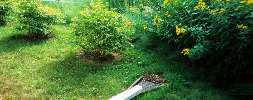 Downspout to a rain garden